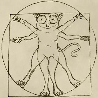 Tarsius vetruvio (Витрувианский долгопят)